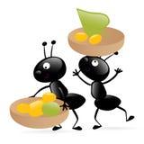 Twee kleine hardworking insecten Stock Afbeeldingen
