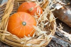 Twee kleine heldere oranje pompoenen van erfgoed Rode Kuri in de rieten installaties van de mand droge herfst op hout opent tuin  royalty-vrije stock afbeeldingen