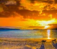 Twee kleine honden die op het strand bij zonsondergang lopen Stock Foto's