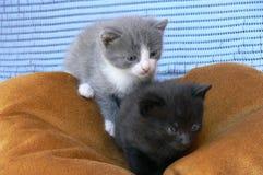 Twee kleine katjes Royalty-vrije Stock Foto's