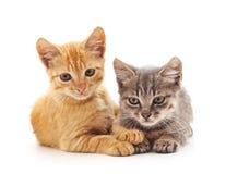 Twee kleine katjes Stock Foto's