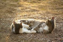 Twee kleine katten Royalty-vrije Stock Foto's