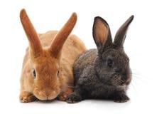 Twee kleine konijnen royalty-vrije stock foto's