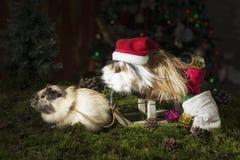 Twee Kleine proefkonijnen in Kerstmisstemming stock foto