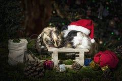 Twee Kleine proefkonijnen in Kerstmisstemming royalty-vrije stock foto
