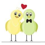 Twee kleurrijke het houden van vogels Stock Fotografie