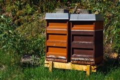 twee kleurrijke houten bijenkorven met bomen op de achtergrond Royalty-vrije Stock Foto's