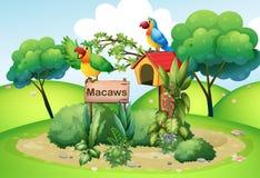 Twee kleurrijke papegaaien bij de heuvel dichtbij een uithangbord Stock Afbeelding