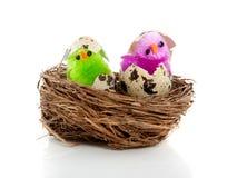 Twee kleurrijke Pasen kuikens royalty-vrije stock foto's