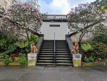 Twee knappe mooie honden die op steenstappen als beschermers stellen die elkaar met bloeiende magnolia's op de achtergrond bekijk royalty-vrije stock foto's