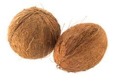 Twee kokosnoten Royalty-vrije Stock Afbeelding