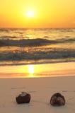 Twee kokosnoten op het strand Stock Afbeeldingen