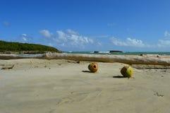 Twee kokosnoten in tropisch paradijs Stock Afbeeldingen