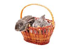 Twee konijnen in een mand royalty-vrije stock fotografie