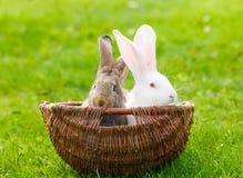 Twee konijnen in rieten mand royalty-vrije stock foto's