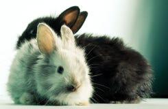 Twee konijntjes Stock Foto