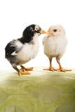 Twee kuikens. stock afbeelding