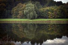 Twee lampen en een kleurrijk bos die in het water nadenken Stock Foto