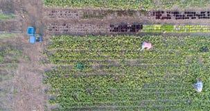 Twee landbouwers die op gebied dichtbij serre 4k werken stock videobeelden