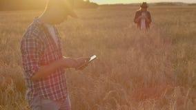Twee landbouwers, een man en een vrouw op een tarwegebied met een tabletcomputer werken en analyseren het succes van het gewas stock videobeelden