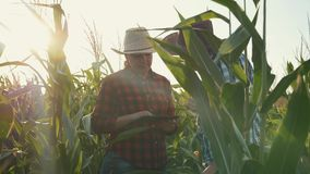 Twee landbouwersman en vrouw in cornfield met een tablet bij zonsondergang De gewassenbespreking stock footage