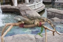 Twee leguanen op de achtergrond van het waterbassin Royalty-vrije Stock Afbeelding