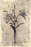 Twee lelies in grungestijl Royalty-vrije Stock Afbeeldingen