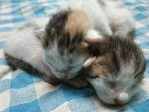 Twee Leuke Babykatjes die Beeld ontspannen stock fotografie