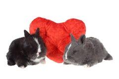 Twee leuke babykonijnen met rode harten stock foto