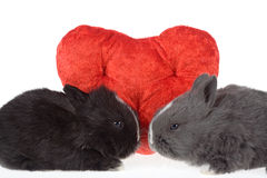 Twee leuke babykonijnen met rode harten stock fotografie
