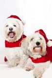 Twee leuke honden in santauitrustingen royalty-vrije stock foto's