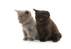 Twee Leuke Katjes Royalty-vrije Stock Afbeeldingen