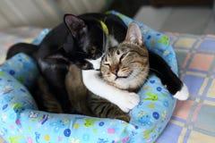 Twee Leuke Katjes Royalty-vrije Stock Afbeelding