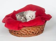 Twee leuke katjes in een mand royalty-vrije stock afbeelding