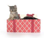 Twee leuke katjes en giftdoos Royalty-vrije Stock Foto's
