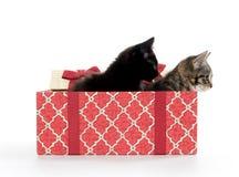 Twee leuke katjes en giftdoos Royalty-vrije Stock Afbeelding