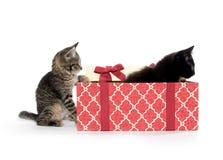 Twee leuke katjes en giftdoos Stock Foto