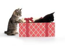 Twee leuke katjes en giftdoos Stock Fotografie