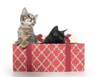Twee leuke katjes en giftdoos Royalty-vrije Stock Afbeeldingen