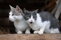 Twee leuke katten Royalty-vrije Stock Foto's