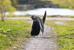 Twee leuke katten die pret het spelen in de werf op het gras hebben Royalty-vrije Stock Afbeelding