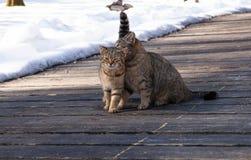Twee leuke katten, zitten zij aan zij op een houten veranda, een de lente zonnige dag Royalty-vrije Stock Foto