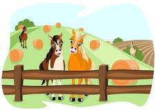 Twee leuke paarden op weiland Royalty-vrije Stock Afbeelding