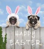Twee leuke pug puppyhonden, omhoog gekleed als Pasen-konijntje, die met poten op houten omheining hangen royalty-vrije stock foto's
