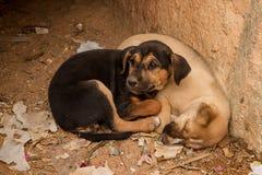 Twee leuke puppy Stock Fotografie
