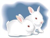 Twee leuke witte babykonijnen. Illustratie Stock Afbeeldingen