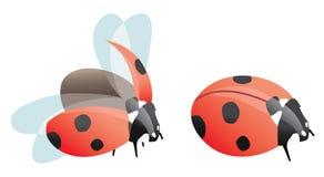 Twee lieveheersbeestjes vector illustratie