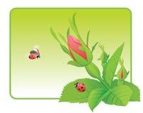 Twee lieveheersbeestjes op de wildernis namen toe stock illustratie