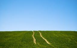 Twee lijnen in aard Stock Foto