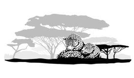 Twee luipaarden Royalty-vrije Stock Foto's